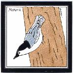 Nuthatch Tile,Nuthatch Wall Plaque,Nuthatch Trivet